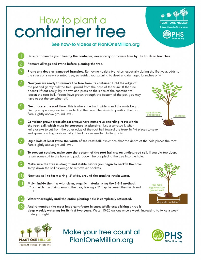 Plant_Container_Tree