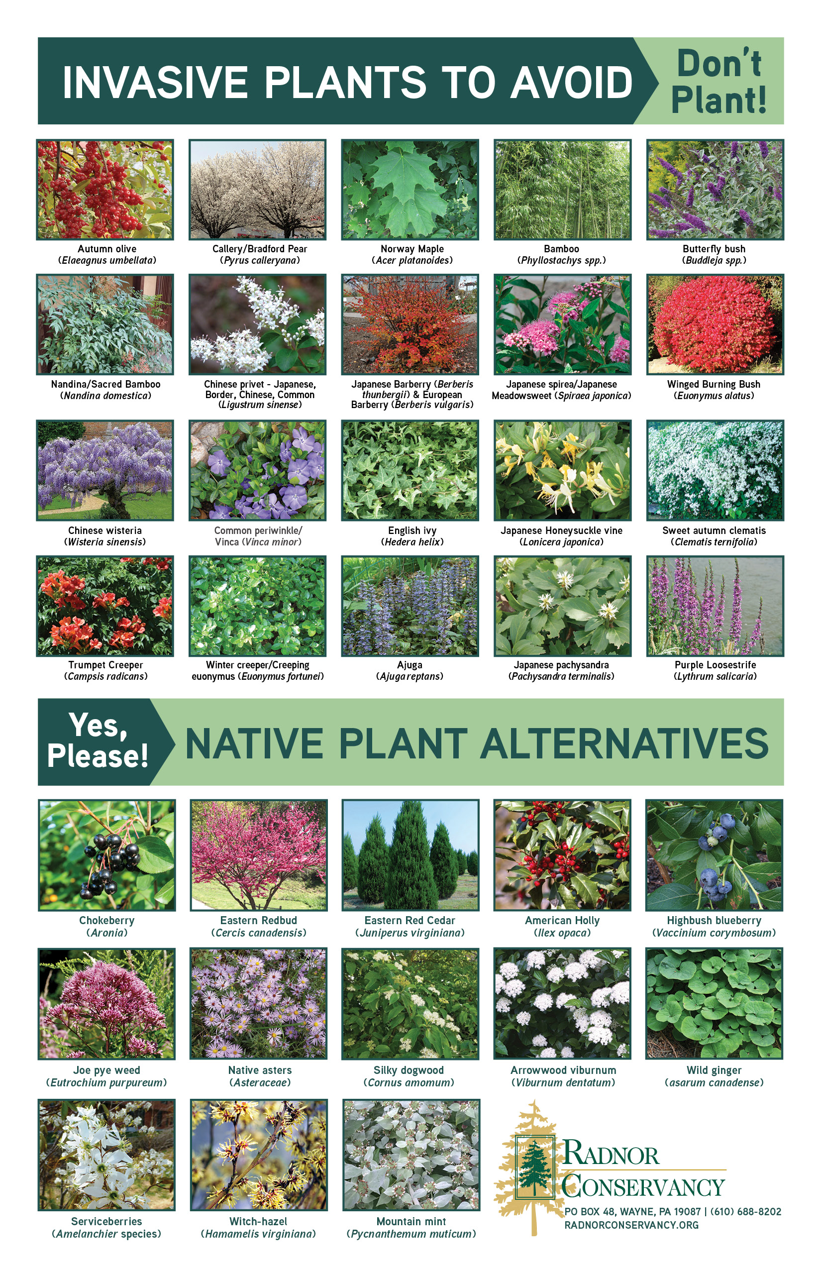 Invasive Plant Guide